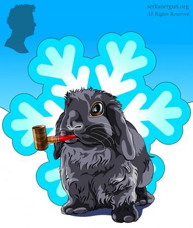 holland lop rabbit serkan ergun
